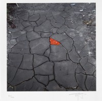 Andy GOLDSWORTHY | Red leaves on cracked earth | Digital Print on paper available for sale on www.kunzt.gallery