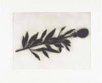 Donald SULTAN | Black Rose (2 of 3) | Etching and Aquatint available for sale on www.kunzt.gallery