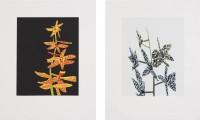 Jonas WOOD | Untitled (Orchid 1 & 2) | Silkscreen available for sale on www.kunzt.gallery