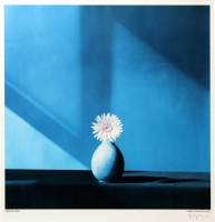 Robert MAPPLETHORPE | African Daisy | Photogravure available for sale on www.kunzt.gallery