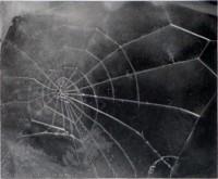 Vija CELMINS | Spider-web | Screen-print available for sale on www.kunzt.gallery