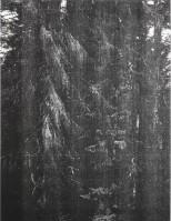 Wolfgang TILLMANS | Wald (Briol III) | Inkjet print available for sale on www.kunzt.gallery